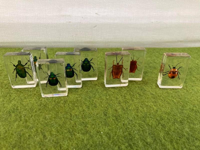 Lot van 8 insecten in plastic