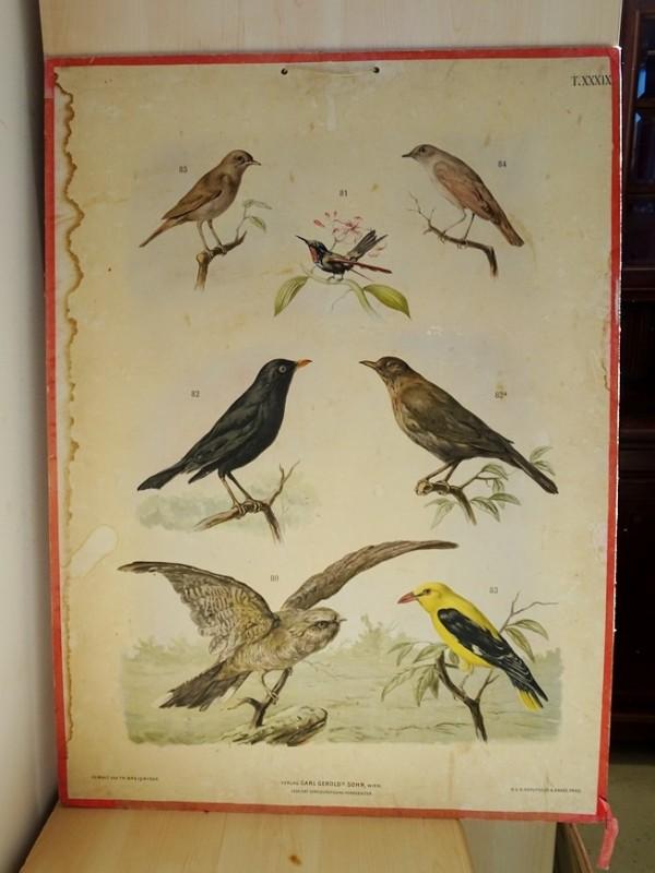 Oude schoolplaat met dierentekeningen XXXIX