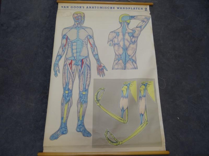 Vintage schoolplaten: Van Goor's anatomische wandplaten 2