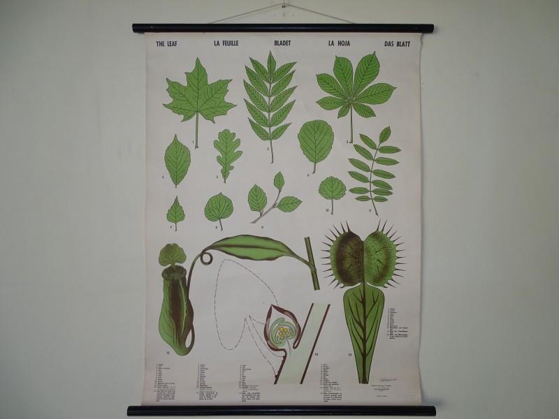 Linnen Schoolkaart: The Leaf, 1943