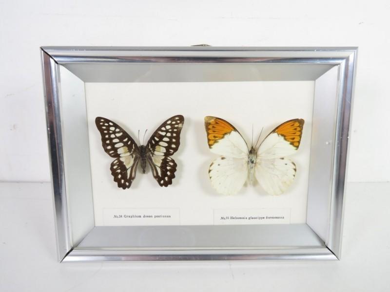 Kader met 2 vlinders