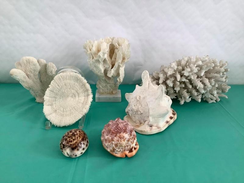 Lot koralen en schelpen