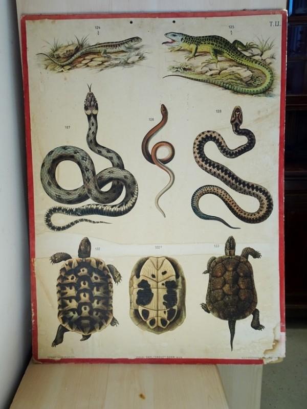 Oude schoolplaat met dierentekeningen LI
