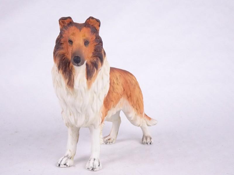 Porseleinen Schotse herdershond.