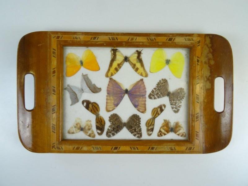 Art deco: dienblad met echte vlinders Zuid-Amerika jaren '50