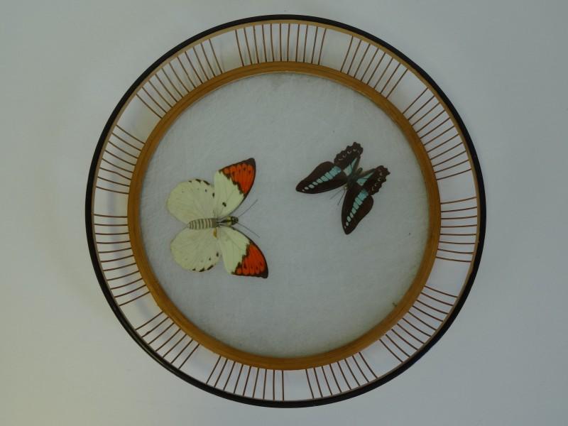 Japans mandje met vlinder
