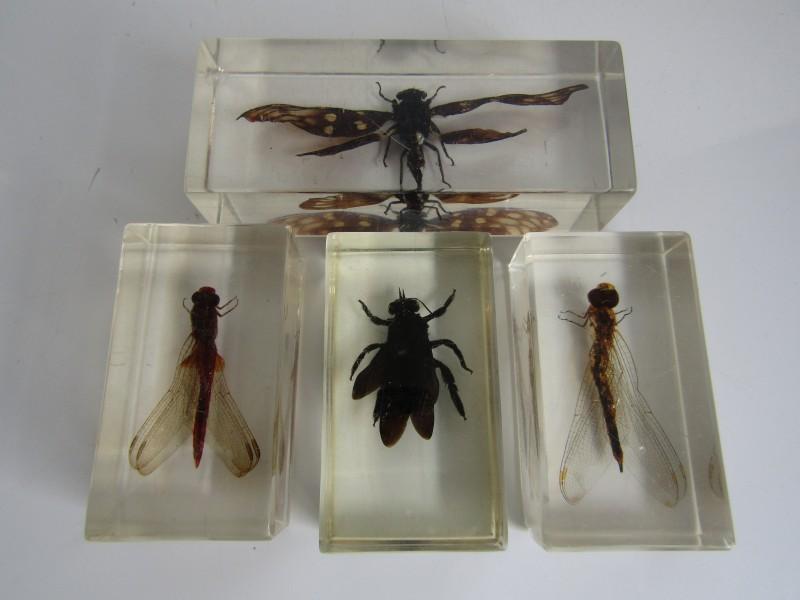 4 Gevleugelde Insecten in Kunsthars