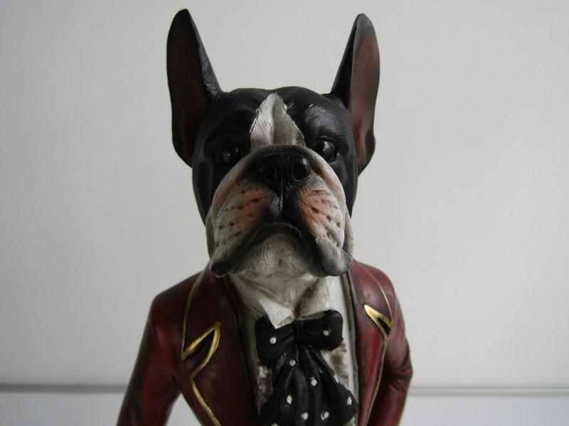 Beeld 2: Hond in Sjiek Kostuum