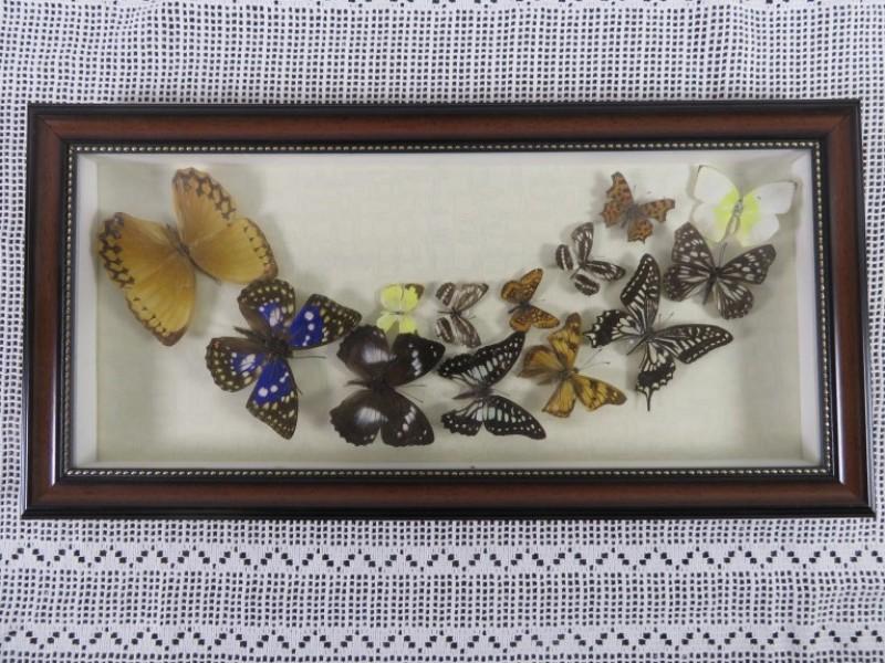 Djembe / Kpanlogo Drum uit Ghana
