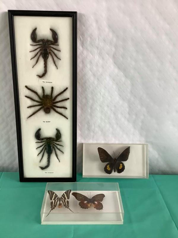 Lot van 3 vlinders en 3 geleedpotigen