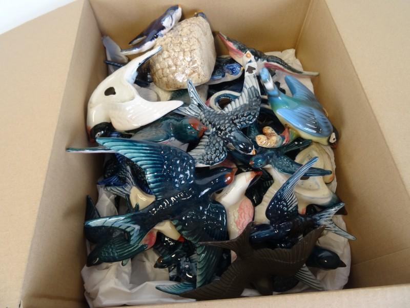 Super groot lot van zwaluwen ±40 stuks