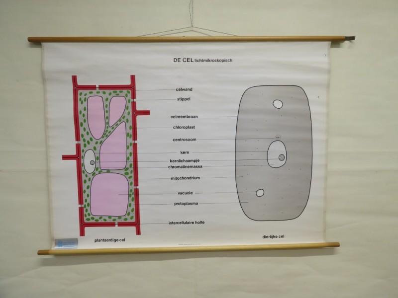 Schoolkaart - De Cel Lichtmicroscopisch