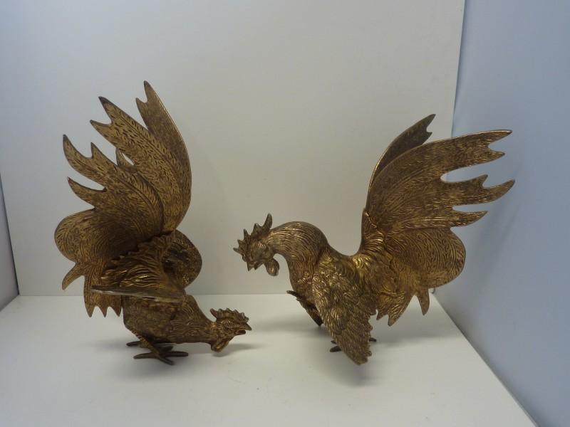 Duo van koperkleurige hanen