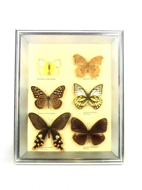 Kader met vlinders